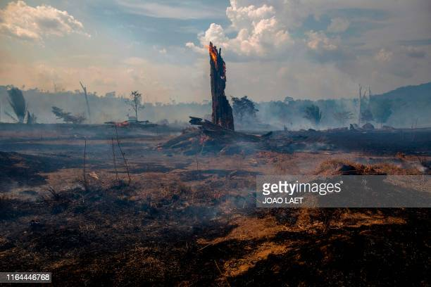 View of a burnt area of forest in Altamira Para state Brazil oin the Amazon basin on August 27 2019 Brazil will accept foreign aid to help fight...