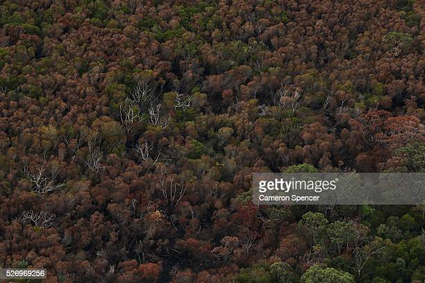 A view of a bushland in KuRingGai National park from a blimp on April 28 2016 in Sydney Australia The Appliances Online blimp is the only operational...