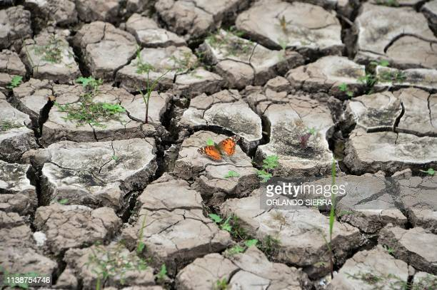 TOPSHOT View of a butterfly on dry earth at Los Laureles reservoir during Earth Day in Tegucigalpa on April 22 2019 Los Laureles which supplies over...