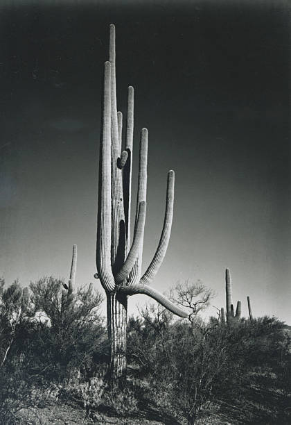 'In Saguaro National Monument'