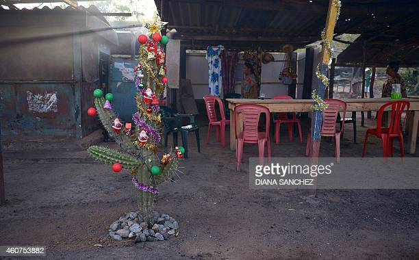 View of a cactus prepared as Christmas tree in Guajira Colombia on December 21 2014 AFP PHOTO/Diana Sanchez