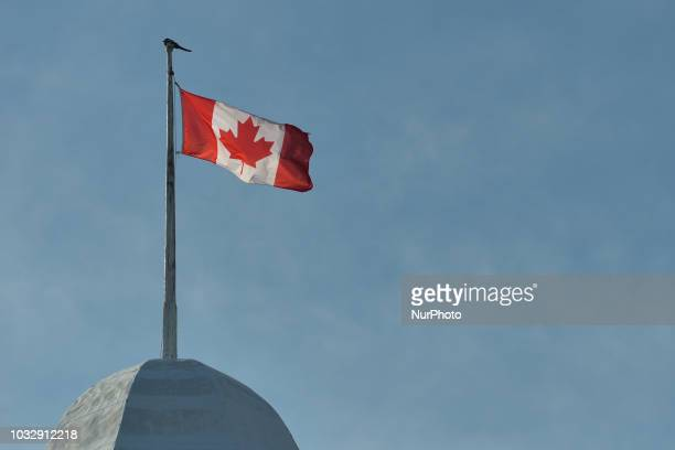 A view of a Canadian National Flag in Edmonton's downtown On Tuesday September 11 in Edmonton Alberta Canada