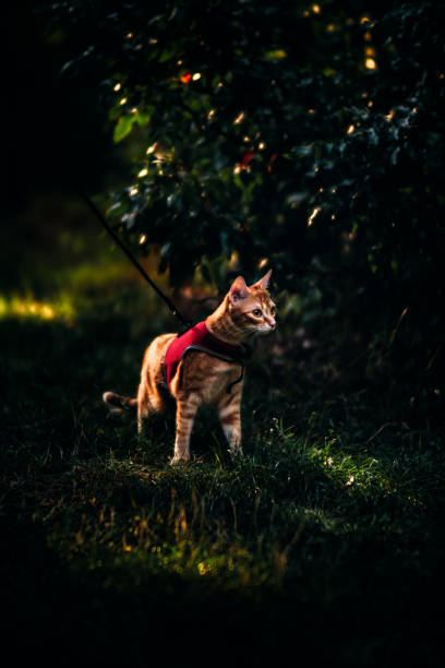 View Of A Cat Looking Away On Field