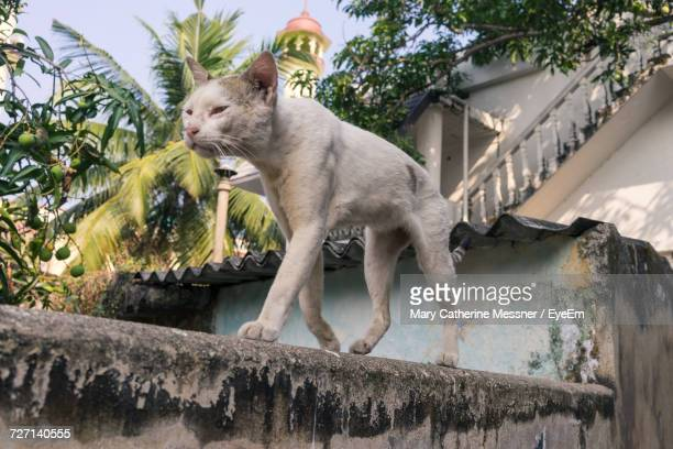 View Of A Cat