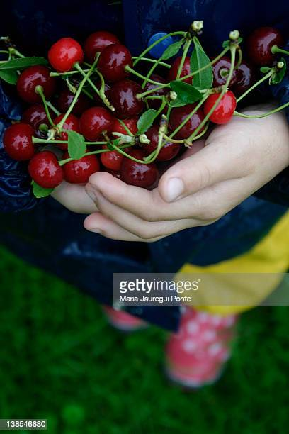 View of a child with hands full of cherries