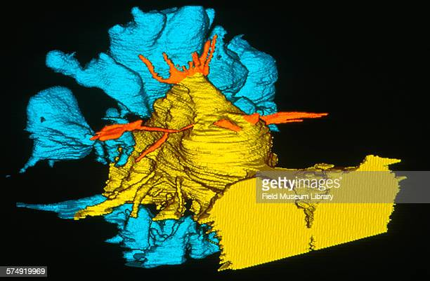 View of a CT scan made from the skull of the brain and sinus cavity of Sue, a Tyrannosaurus Rex skeleton at the Field Museum in Chicago, Illinois,...