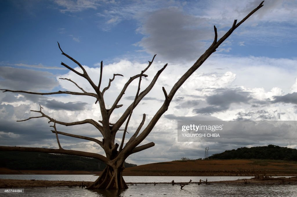 View of a dead tree --normally underwater-- at Funil Hydroelectric Plant reservoir, in Resende, about 160km west from Rio de Janeiro, Brazil, on February 3, 2015. A severe drought --the worst in the country since 1930-- has hit Brazil's three most populous states: São Paulo, Rio de Janeiro and Minas Gerais.