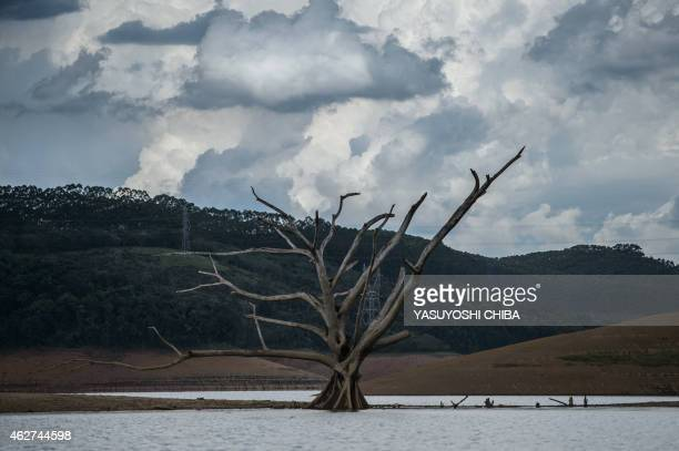View of a dead tree normally underwater at Funil Hydroelectric Plant reservoir in Resende about 160km west from Rio de Janeiro Brazil on February 3...