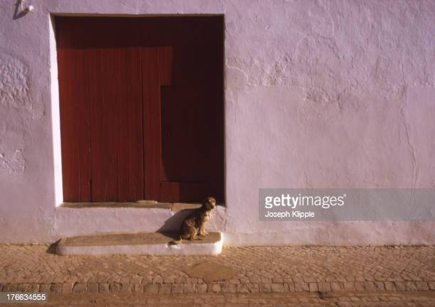 View of a dog as it sits on a single step in front of a large red wooden doorway set in a stucco wall on a cobblestone street Faro Portugal 1970
