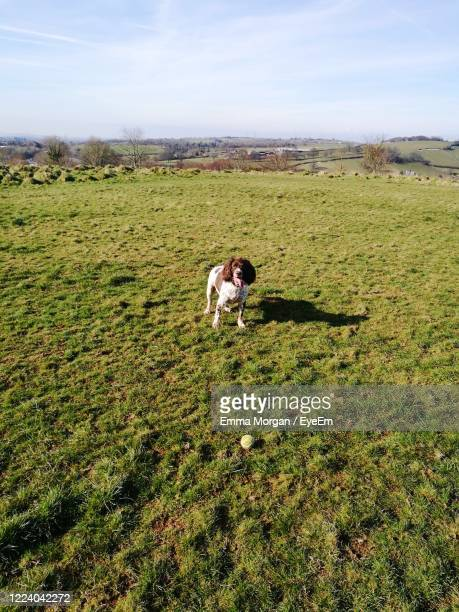 view of a dog on landscape - newport wales photos stock pictures, royalty-free photos & images