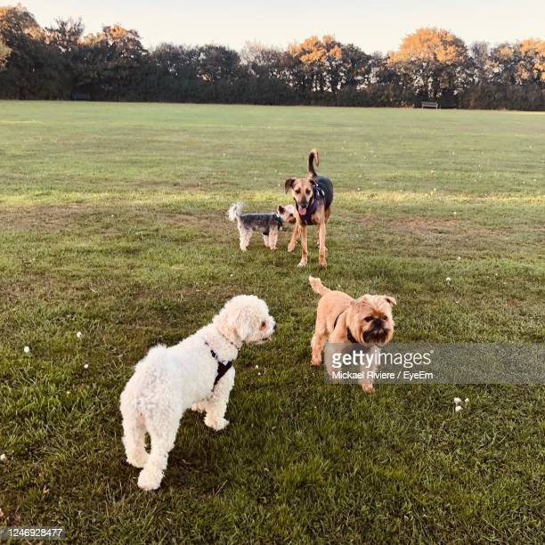 view of a dog on landscape - northampton stock pictures, royalty-free photos & images