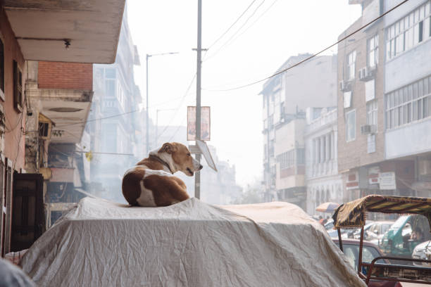 View Of A Dog On The Wall