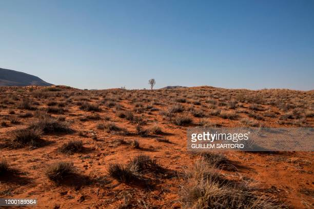 A view of a dry plain in the northern Kalahari region on January 16 2020 In the Northern Cape Province of South Africa at the gateway to the Kalahari...