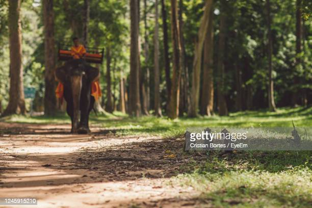 view of a elephant and monkeys in the forest - bortes stock pictures, royalty-free photos & images
