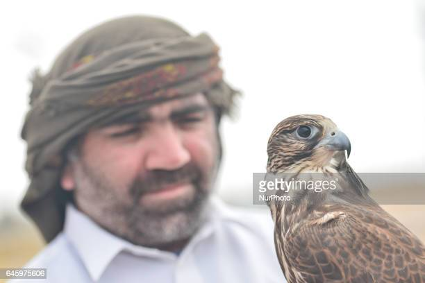 A view of a Falcon and his trainer/owner Falconry is UAE's oldest tradition and it dates back to 2000 years that started as a source for food to hunt...