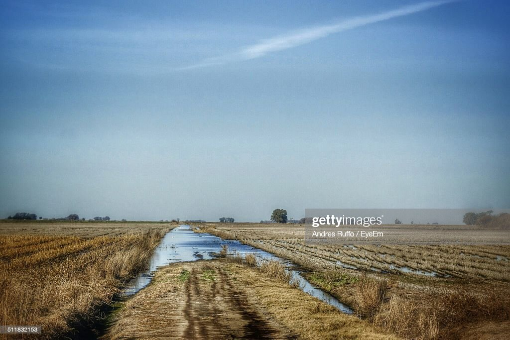 View of a field : Stock Photo