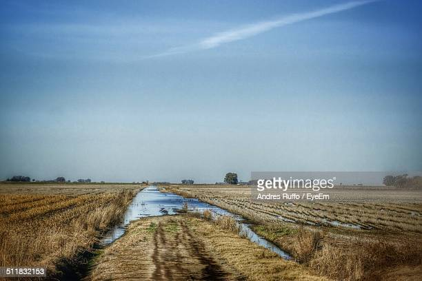 view of a field - andres ruffo stock pictures, royalty-free photos & images