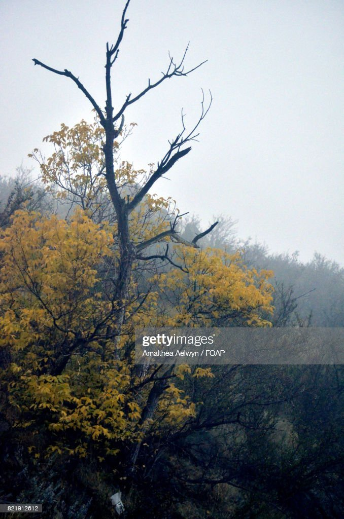 View of a foggy morning in Colorado : Stock Photo