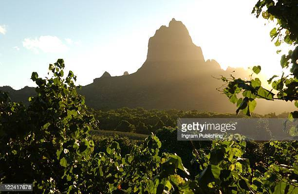 View of a forest and a hill, Moorea, Tahiti, French Polynesia, South Pacific