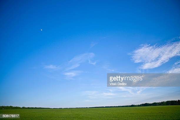 view of a green landscape with sky above - horizon over land stockfoto's en -beelden