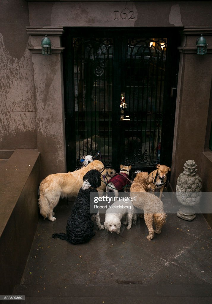 Dogs In Brooklyn : News Photo
