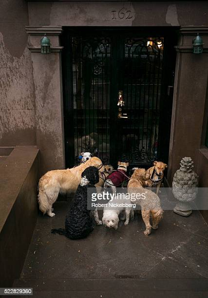 View of a group of dogs as they wait for a walker outside a door in Brooklyn, New York, New York, April 7, 2016.