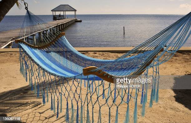 A view of a hammock on the beach on October 24 2010 in the Island of Ambergris Caye Belize Central America hammock in carabbean islands Ambergris...