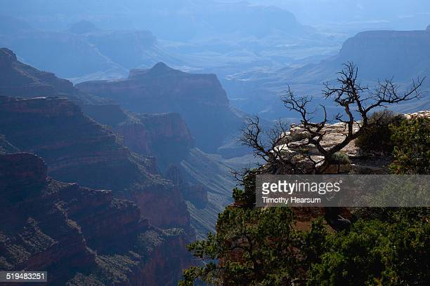 view of a hazy grand canyon from the north rim - timothy hearsum stock pictures, royalty-free photos & images