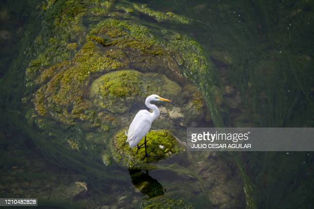 View of a heron on the Santa Catarina river where a bridge was built and which environmental activists believe will affect the water course in rainy...
