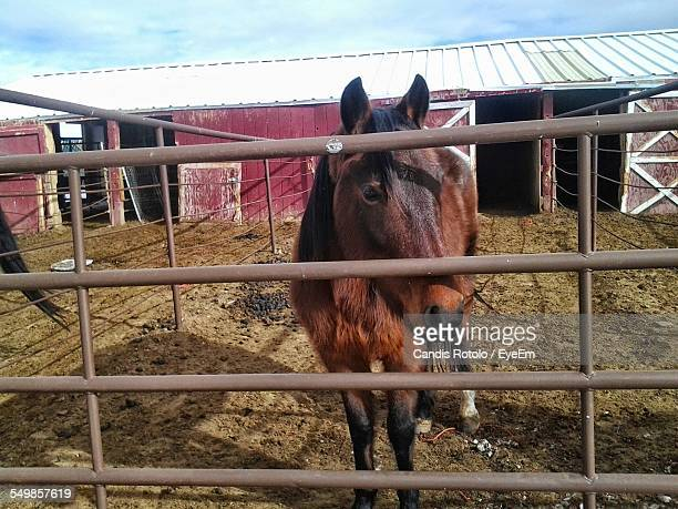 view of a horse in paddock at field - paddock stock photos and pictures