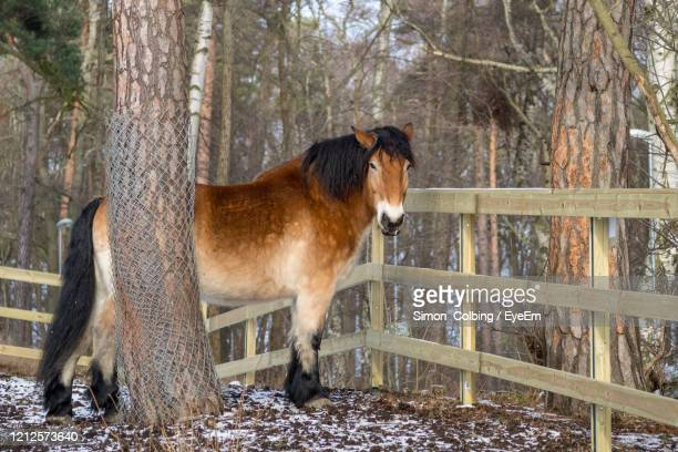 view of a horse in the winter - colbing stock pictures, royalty-free photos & images