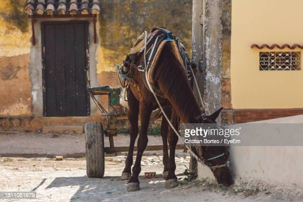 view of a horse - bortes stock pictures, royalty-free photos & images