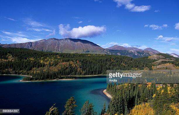 View of a lake close to Dawson city Yukon westernmost of Canada's territories Boreal forest Autumn