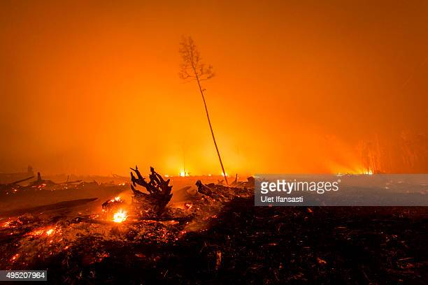 A view of a land as peatland forest is cleared by burning for a palm oil plantation at a company's grounds on November 1 2015 in the outskirts of...