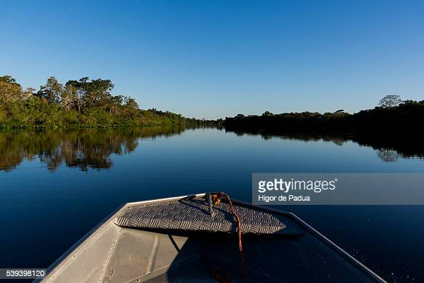a view of a large river, with a mirror of water reflecting the sky and vegetation. seen from inside a boat sailing the river. - animal selvagem ストックフォトと画像