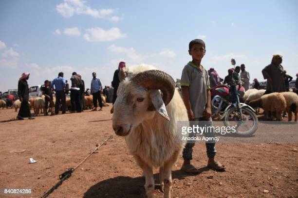 A view of a livestock market ahead of Eid alAdha also called as Feast of the Sacrifice the second of two religious holidays celebrated by Muslims...