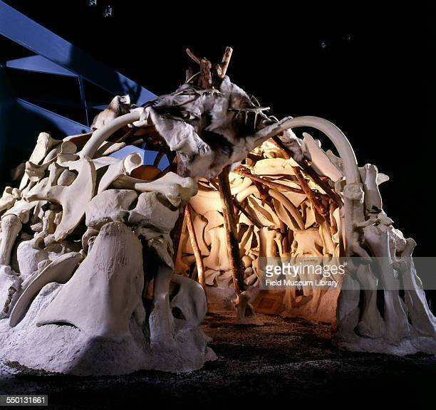 View of a mammoth bone hut reconstructed with fiberglass casts and reindeer skins and installed as part of the permanent exhibit Teeth Tusks and Tar...