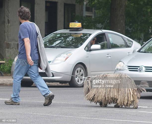 View of a man walking across the street with his leashed dog possibly a Komondor with a fully corded coat Montreal Canada 2013 A hybrid taxicab is...