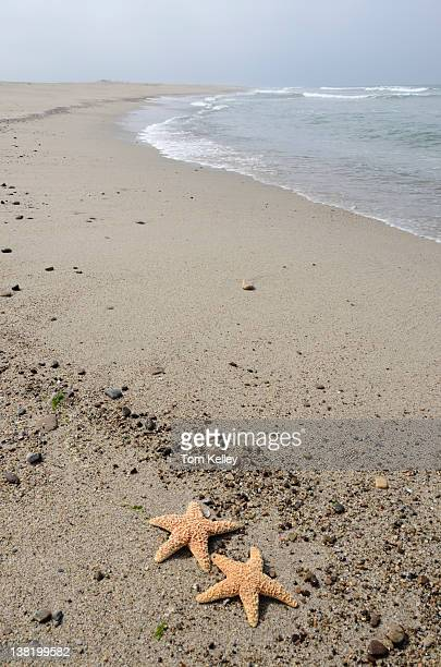 View of a pair of starfish on a beach California May 6 2011