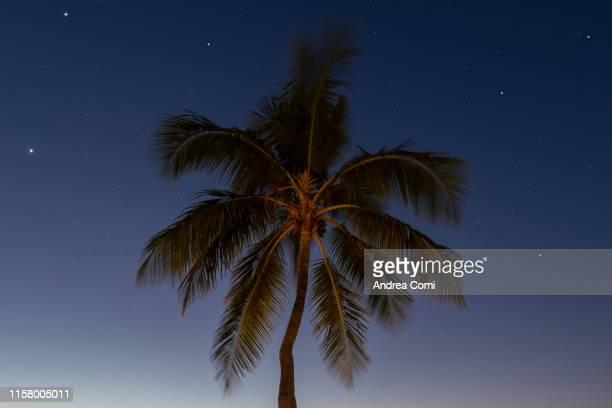 view of a palm tree at night - islas mauricio fotografías e imágenes de stock