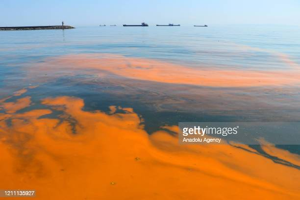 A view of a red tide causing discoloration of coastal waters due to large algal blooms as the sea water temperature raised at Marmara Sea in Tekirdag...