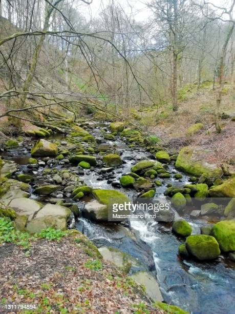 view of a river with rocks in the forest. river cold water in hebden bridge - named wilderness area stock pictures, royalty-free photos & images
