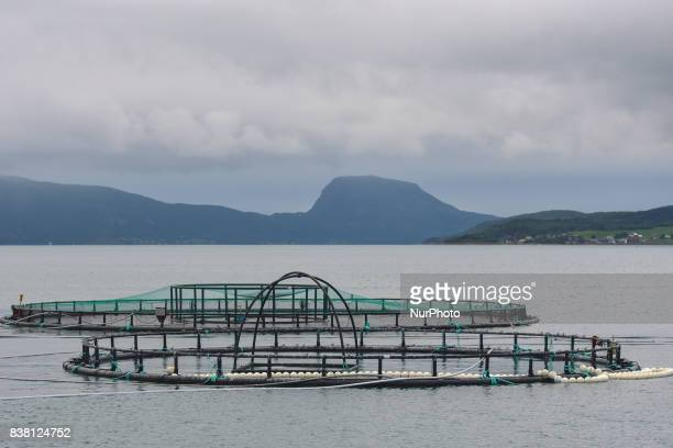 A view of a salmon farm near Rolla and Andorja Island Norway Royal Salmon informed that its operating revenue grew by 239 per cent in the second...