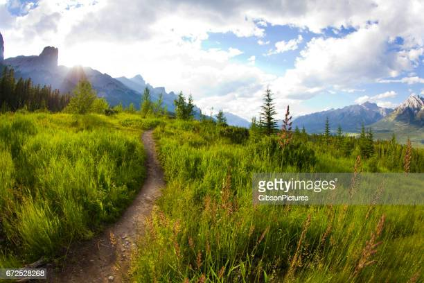 A view of a singletrack trail for mountain bikers, hikers and runners at the Canmore Nordic Centre in Canmore, Alberta, Canada.