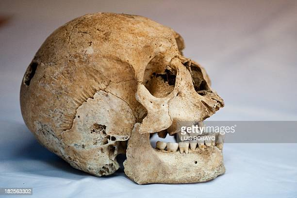 View of a skull of preHispanic indigenous man at the PreHispanic Ossuarty in Cali Colombia on September 30 2013 The ossuary preserves some 250 bone...