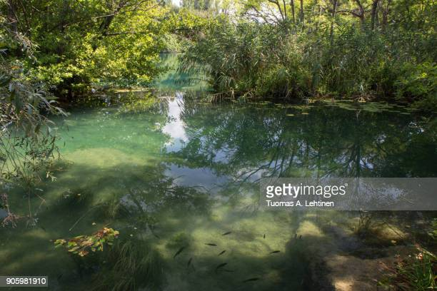 View of a small pond and lush trees and bushes at the Krka National Park in Croatia on a sunny day.