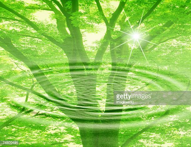 View of a tree with ripples (digital composite)