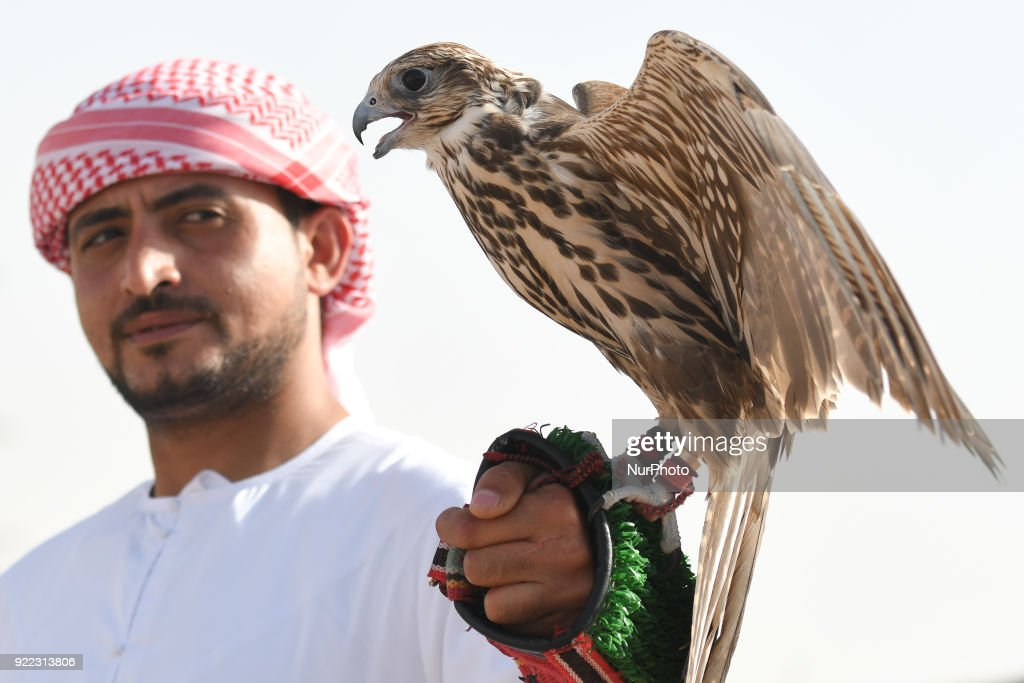Falconry - UAE's oldest tradition and sport : ニュース写真