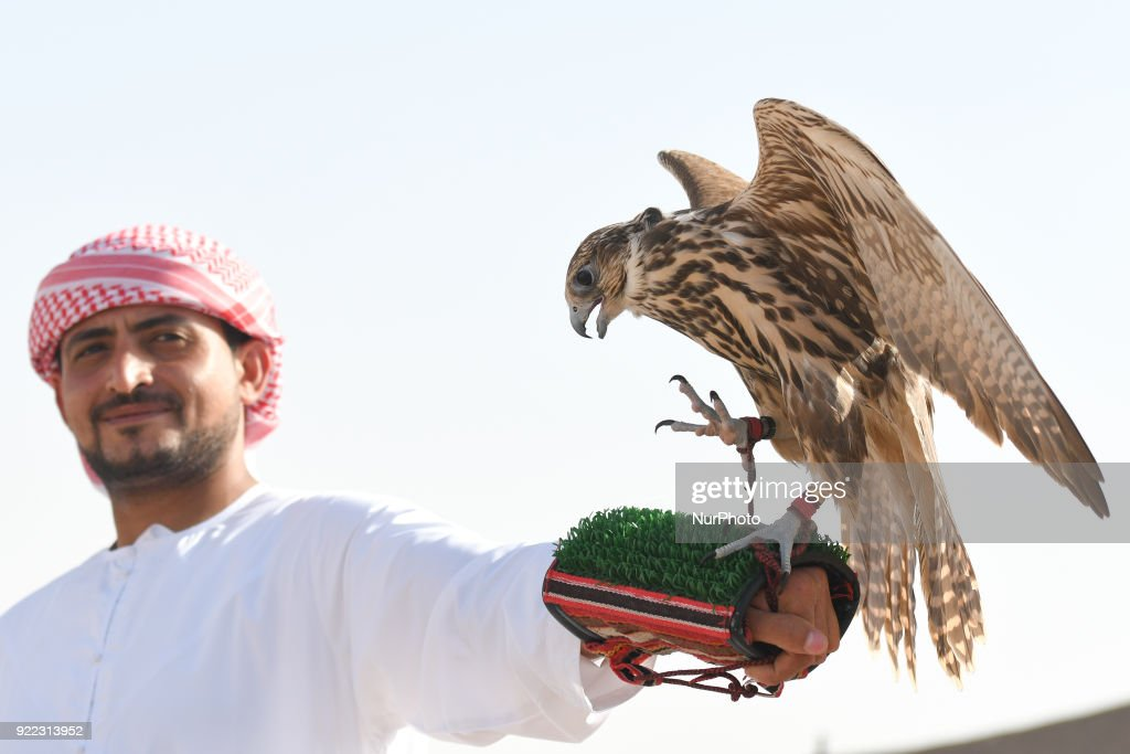 A view of a two year old falcon and his trainer during a demonstration. Falconry is UAE's oldest tradition and it dates back to 2000 years that started as a source for food, to hunt hares and houbara. It was also considered a way of life for leaders of the tribe. On Wednesday, February 21, 2018, in Madinat Zayed, Abu Dhabi, United Arab Emirates.