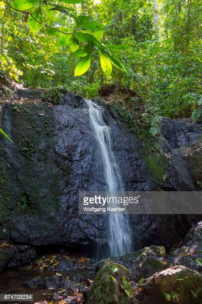 View of a waterfall in the rainforest near the Campanario Biological Station which lies in the Pacific lowland tropical rain forest of the Osa...